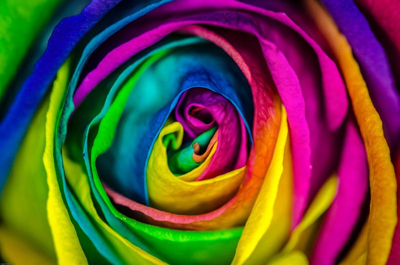 All Your Beautiful Colours