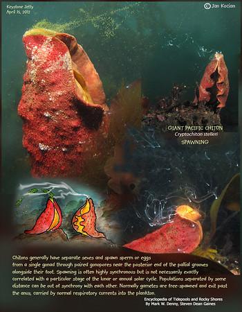 Shells, clams