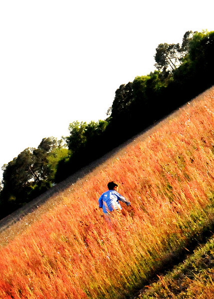 redgrass_9239 copy.jpg