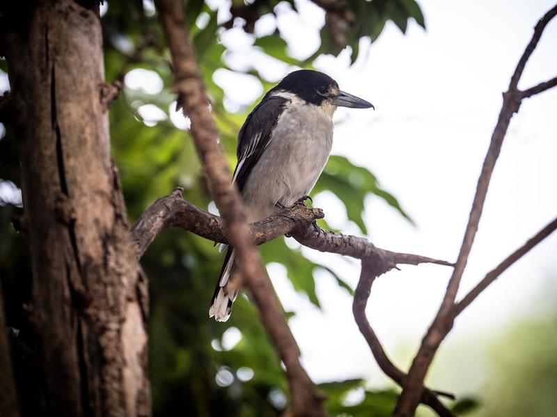 20190319_4467 birds .JPG