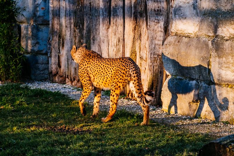 Tonis Zoo-0279.jpg