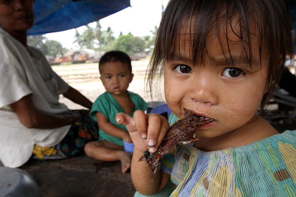 . San Smey, 4, eats a piece of roasted rat in the provincial town of Battambang, 290 km (181 miles) northwest of the capital Phnom Penh February 19, 2004. With meat-eaters shying away from chicken because of the deadly bird flu virus rampant across Asia, sales of rat are rocketing in the impoverished southeast Asian nation. REUTERS/Chor Sokunthea   ED/SH - RTRD63Q