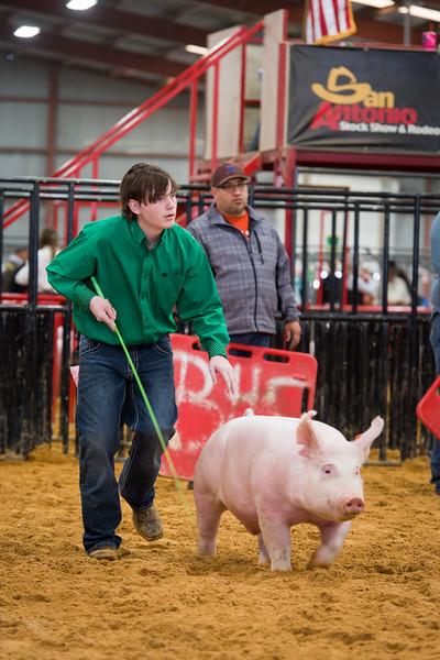 2016 (Dec) Bexar County - Swine