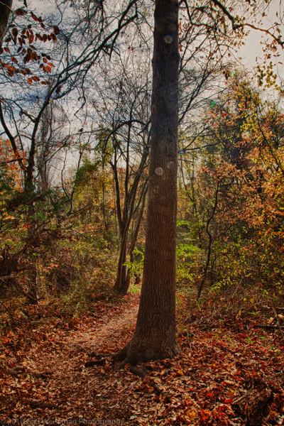Trailside Park-7388_HDR.jpg