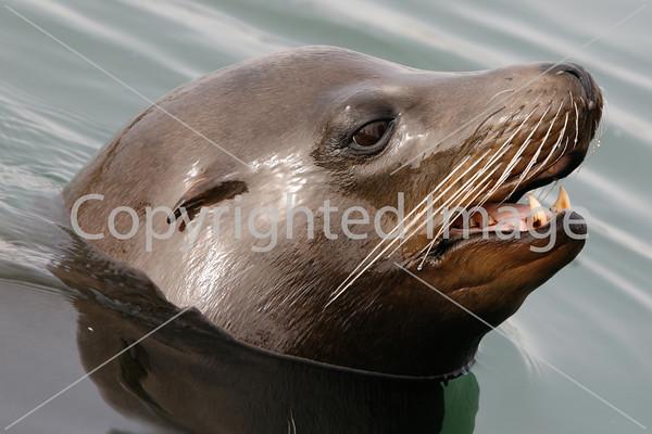 25. Marine Life