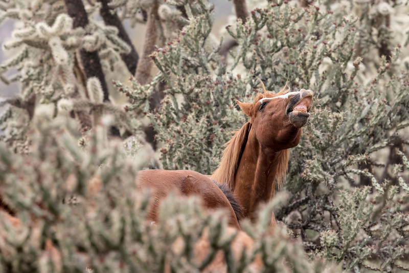 Wild Horses Lower Salt River