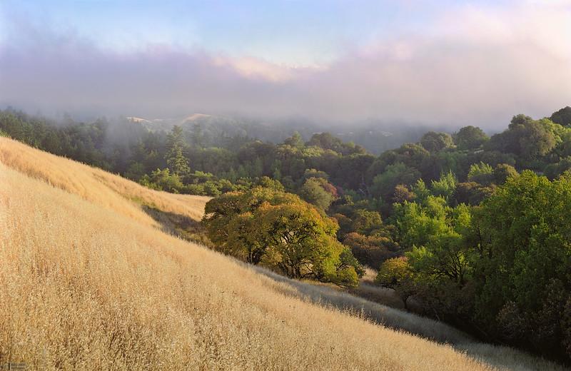 Buckeye Hill