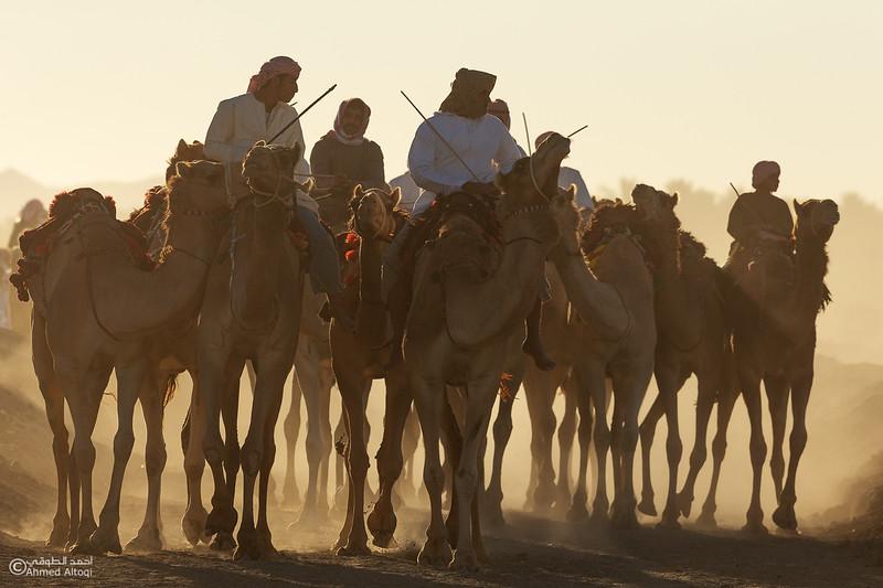IMGL8801-1- Camel Race.jpg