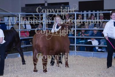 2014 KISD Livestock Show Steers