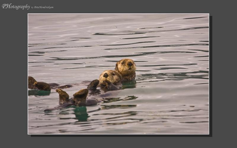 My Alaska 12-08-086.jpg