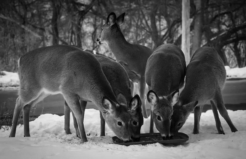 01-29-2021-deer-8.jpg