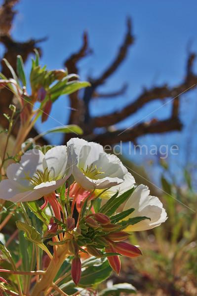 #12 Desert Flowers 2.JPG