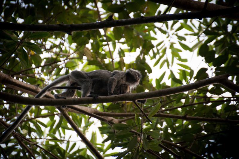 Borneo-2014-63.jpg