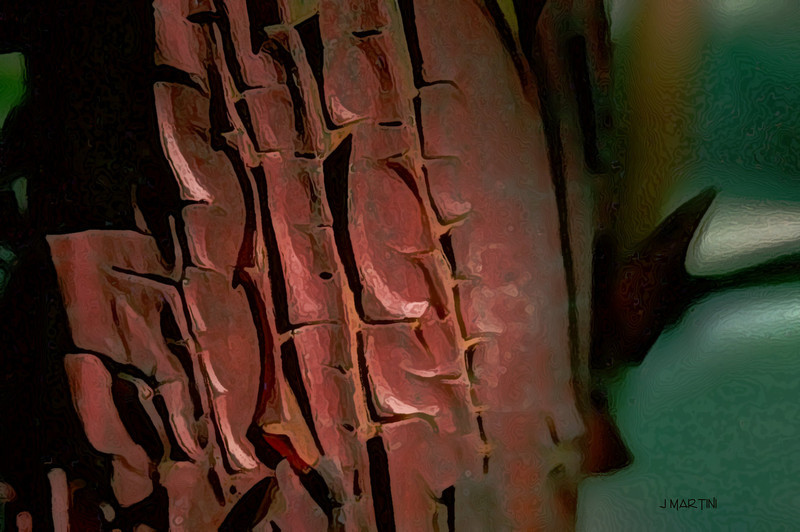 madron bark 4-5-2008.jpg
