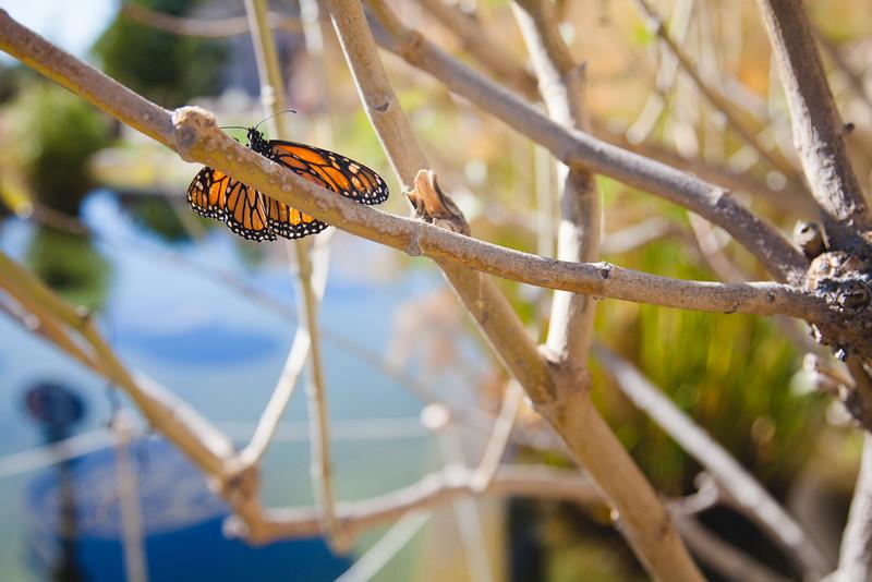 Natura Balboa park-2.jpg