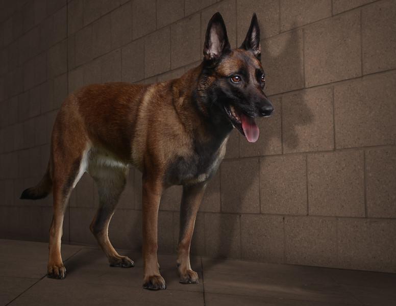 Browndog-3.jpg
