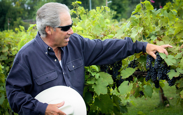 Valentino Vineyards and Winery