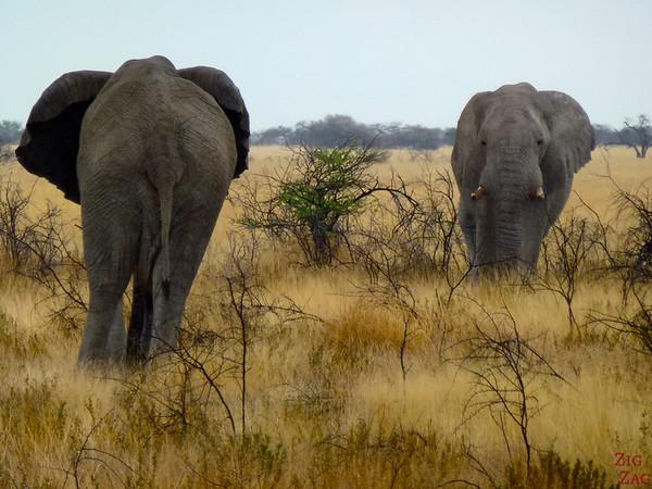 Spotting elephant in Etosha National Park, Namibia 3