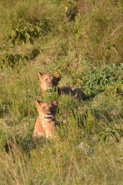 East Africa Safari 127.jpg