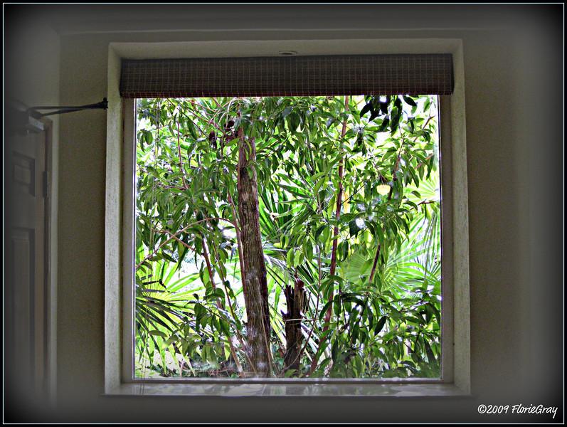 Windowscape, Xpuha  ©2009 FlorieGray