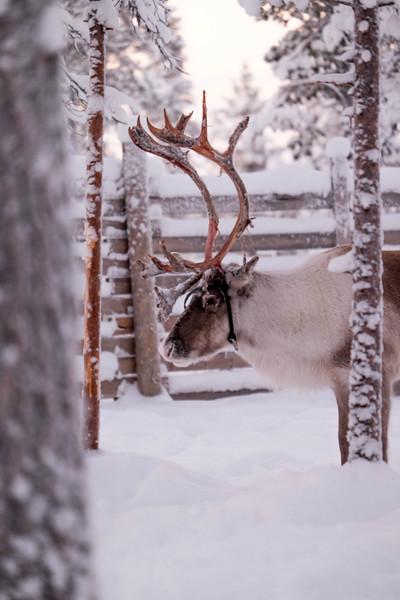 Finland_160117_95.jpg