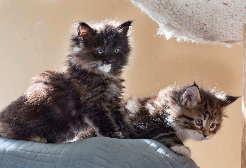 Kittens228.jpg