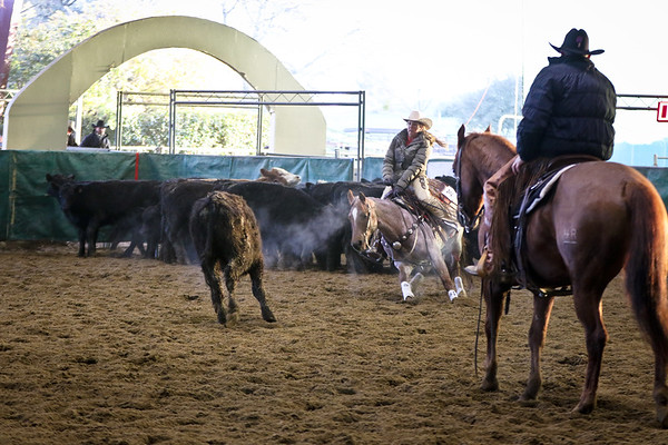 Jr. Horse