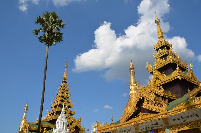 DSC_3730-shwedagon-paya-tree-and-temples.JPG