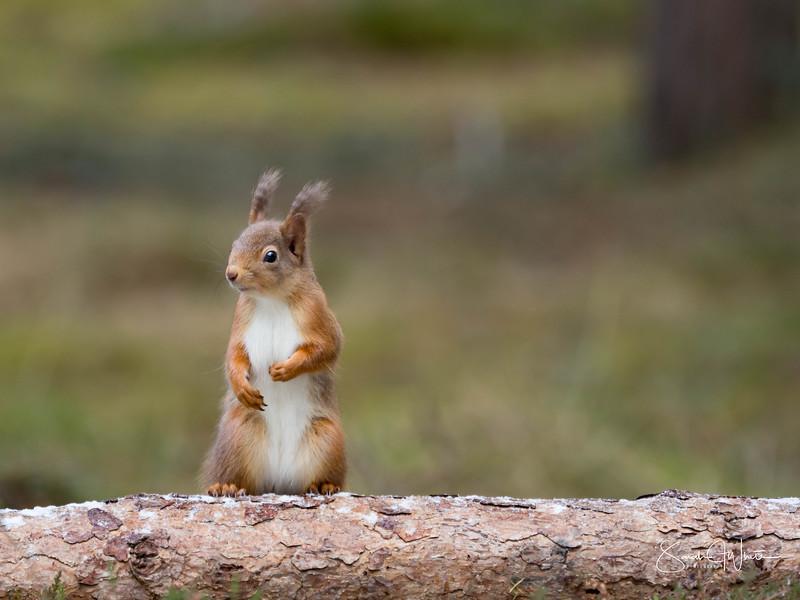 RedSquirrelBootCamp_120217_197.jpg