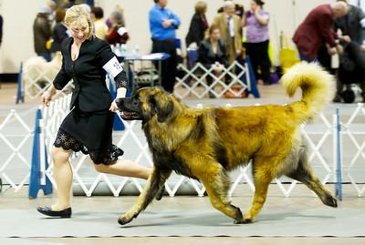 Vikahn 19: Dog Shows 2 Years