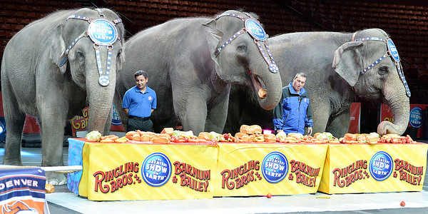 Ringling Brothers Circus Comes To Greenville