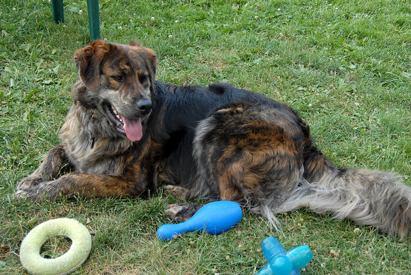 2010-06-30 Denville Dog Park
