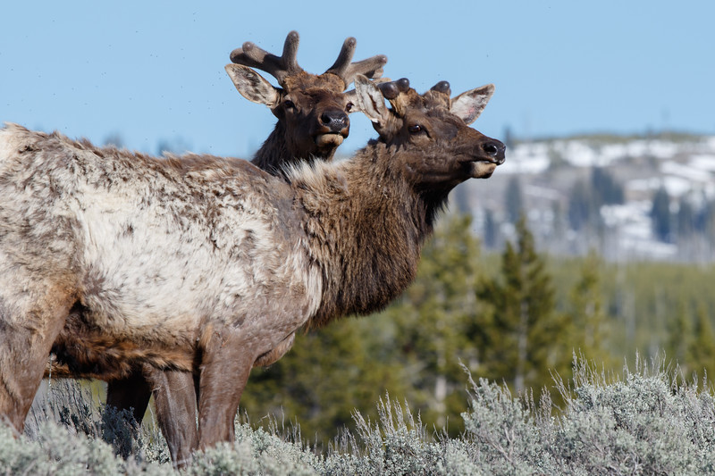 Yellowstone-2202.jpg