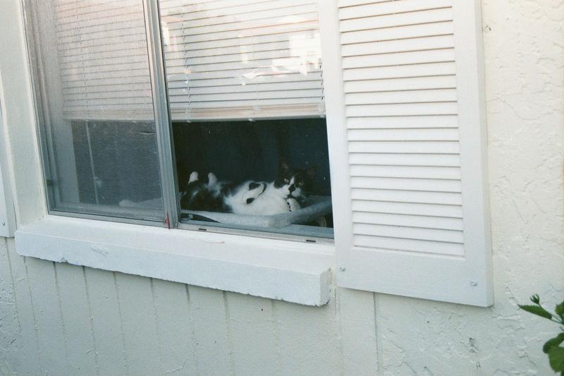 2001 08b - Cats at old apt 31.JPG