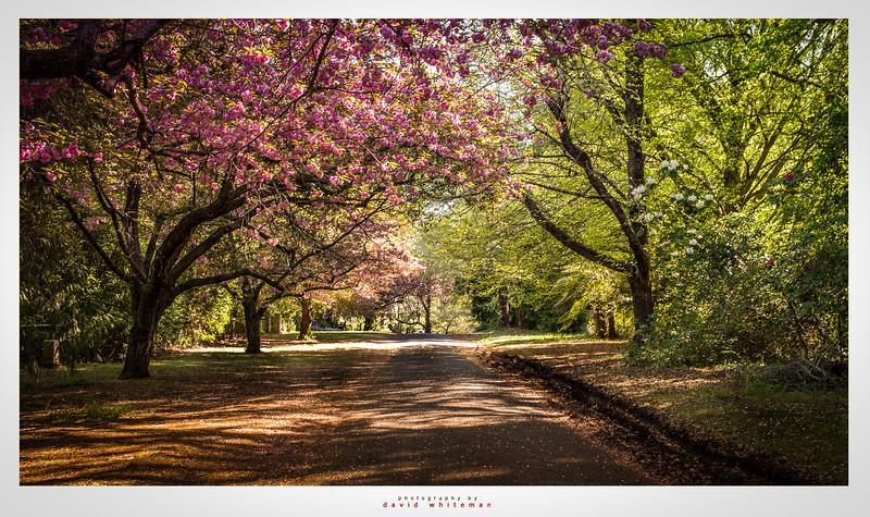 Queens Avenue in Spring