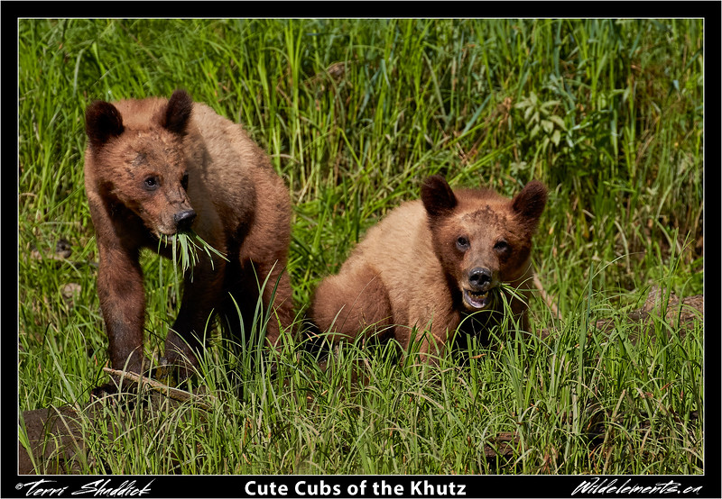 Cute Cubs of the Khutz