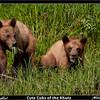 Cute Cubs of the Khutz