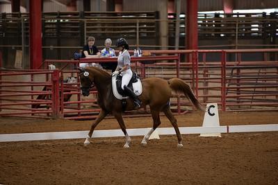 Horse 452