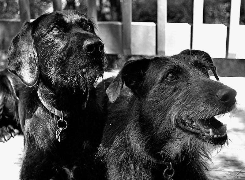 dog project 3 9-2-2012.jpg