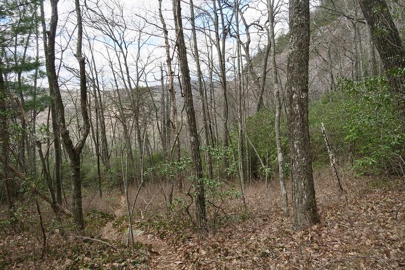 Laurel Knob Trail - 3,980'