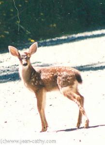 British Columbia 1994 -  (12 of 13)