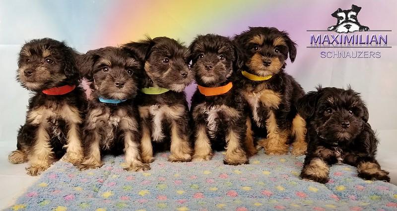 Yanabell Pups 013.jpg