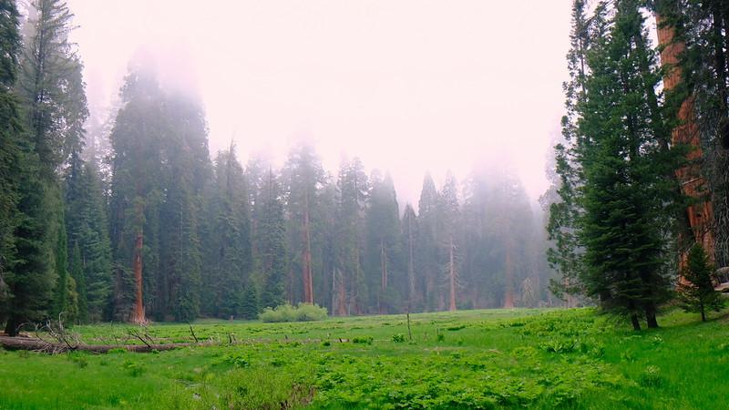 California Day 6 Sequoia 05-30-2017 83.JPG