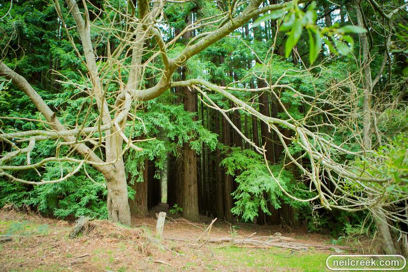 creek-140819-160.jpg