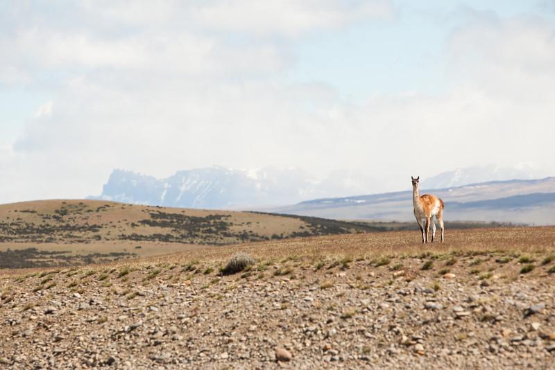 patagonia-1065.jpg