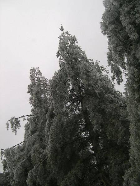 Bella Vista, AR