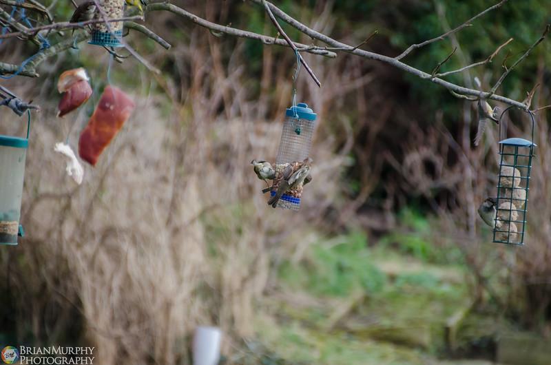 Birds 050218-9.jpg
