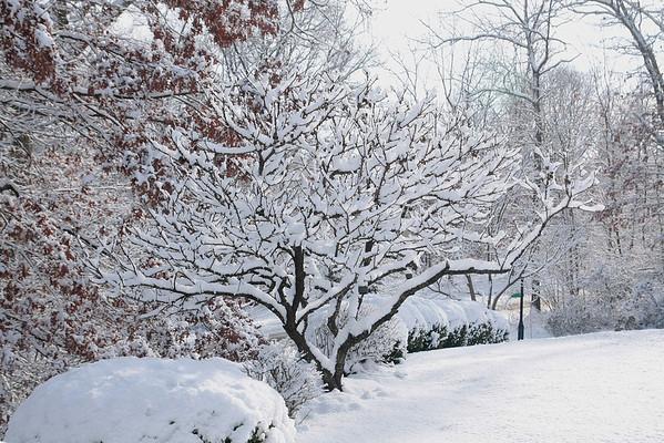 Snow Feb 4, 2014
