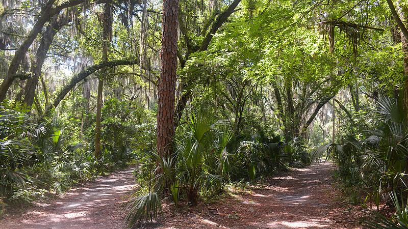 Path at Gemini Springs
