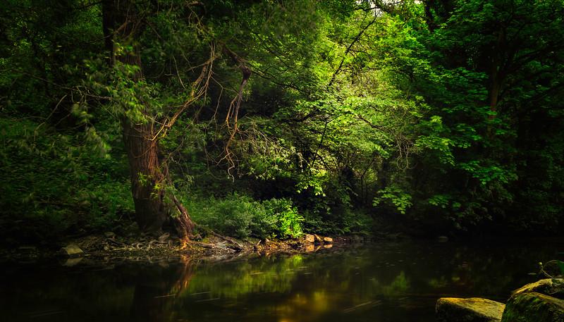 Forest Shadows-169.jpg